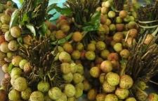 India: il lychees uccide i bambini poveri