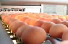 Germania: allarme per miliardi di uova inquinate. Vengono dall'Olanda