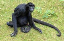 L'uomo discende davvero dalla scimmia?