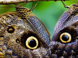 strategia della farfalla