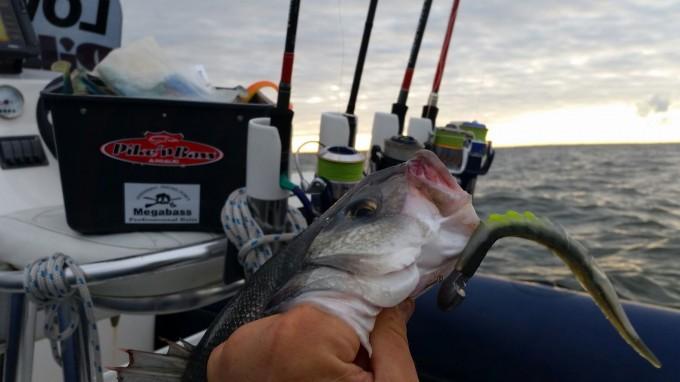 plusieurs cannes permettent de pêcher rapidement un poste