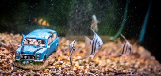 Tanks for Fish