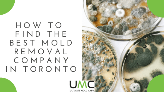 How-To-Find-The-Best-Mold-Removal-Company in toronto area
