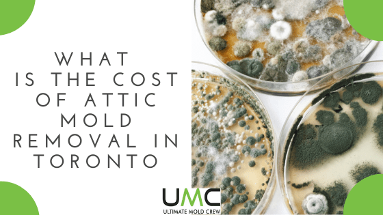 What-Is-The-Cost-of-Attic-Mold-Removal-in-Toronto
