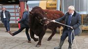Boris Johnson en campagne en Ecosse ce vendredi