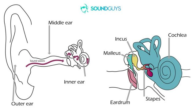 Noise-induced hearing loss: Two diagrams. The one on the left shows how sound travels into the ear and the right is a close-up fo the middle and inner ears.