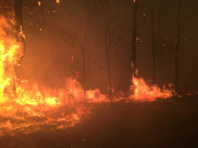 L'incendie, en cours au Tuzan (Gironde).