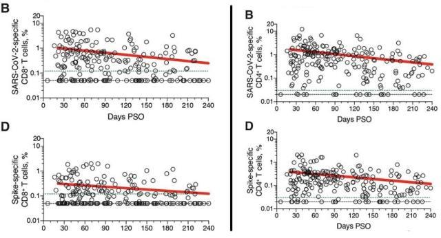 graphique evolution taux lymphocytes