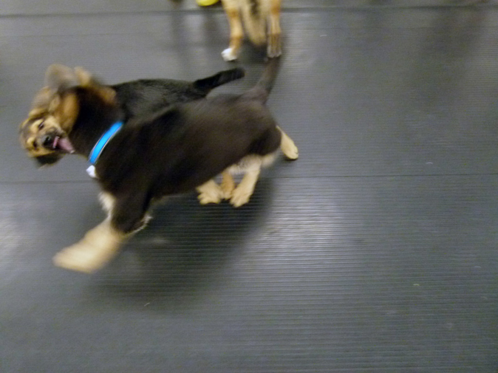 Dogs communicate largely through body language. techniques, during play time. Sometimes dog play can appear frightening to the uneducated eye.
