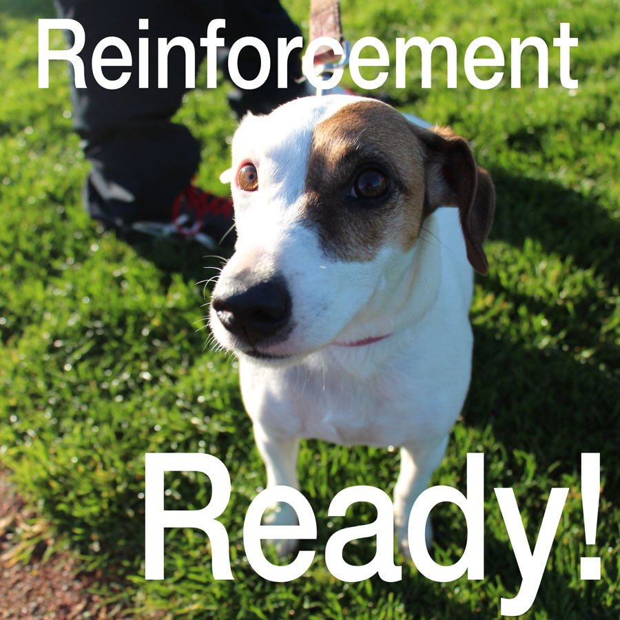 Reinforcement when training a puppy