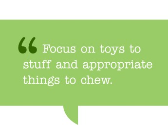this is a pull quote which reads: Focus on toys to stuff and appropriate things to chew