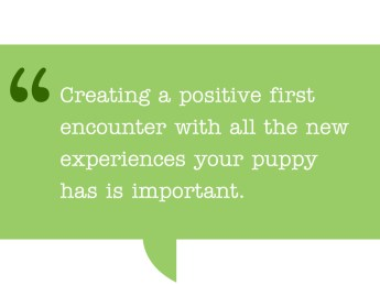Pull quote: Creating a positive first encounter with all the new experiences your puppy has is important. ultimatepuppy.com