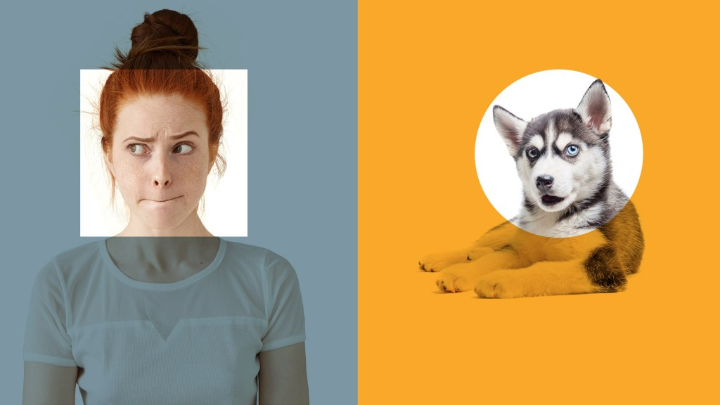 A woman on the left looks confused while a husky puppy on the right looks directly at the camera