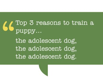 pull quote reads: Top 3 reasons to train a puppy... the adolescent dog, the adolescent dog, the adolescent dog.