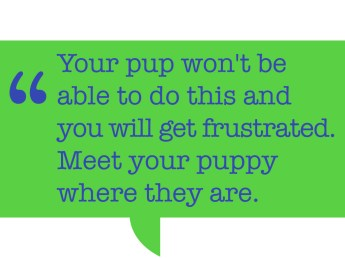 "Pull quote: ""Your pup won't be able to do this and you will get frustrated. Meet your puppy where they are."""
