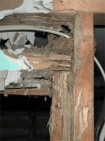 Termite Structural Damage