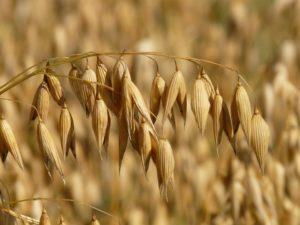 Stop Glifosato: della Monsanto e di altri demoni