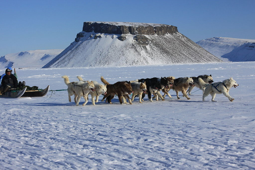 cani da slitta Groenlandia