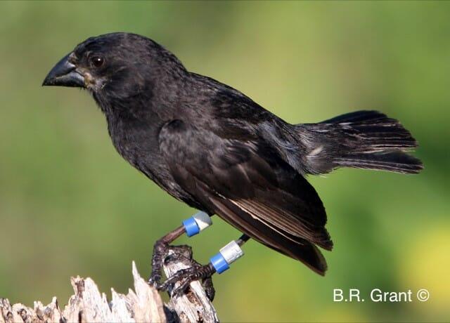 Il big bird: madre