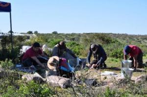 Tasso del miele preistorico: sito di scavi