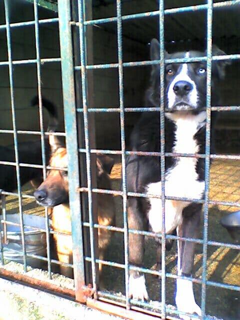 aggressività nei cani di canile