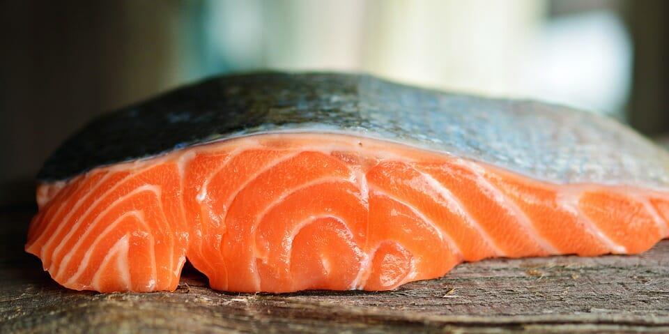 salmoni allevati a terra
