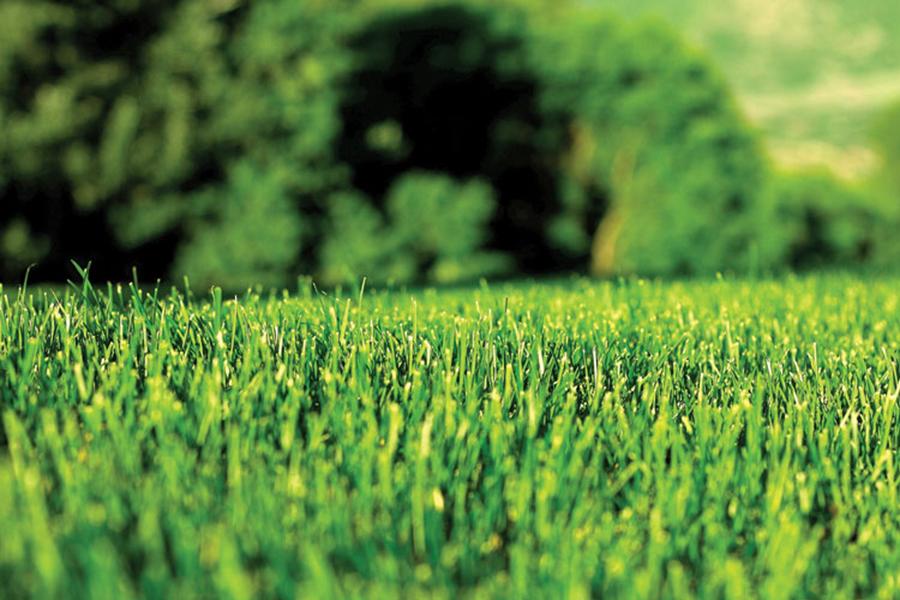 Slow Release Fertilizers Australia Benefits