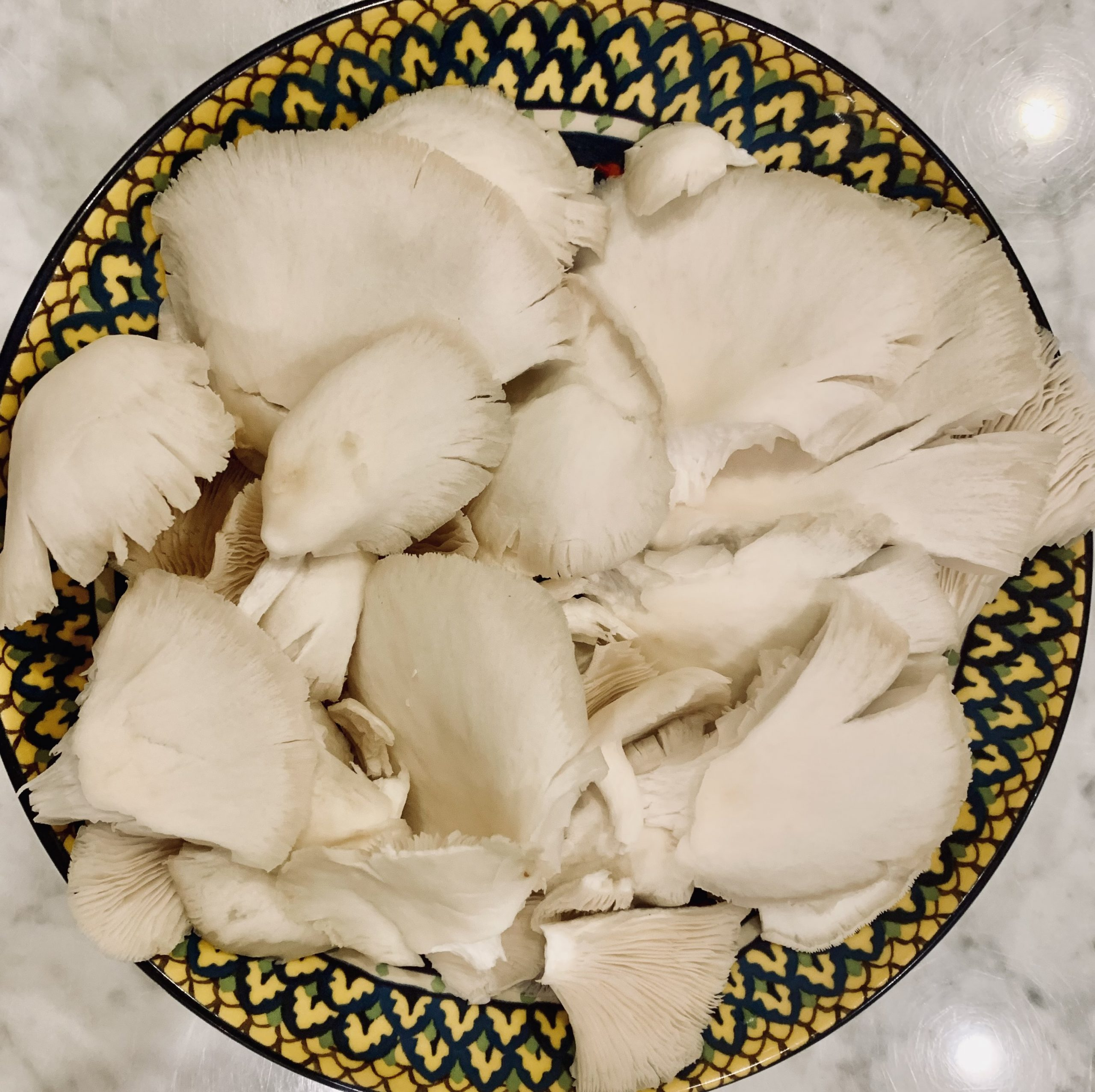 Oyster Mushrooms from Rebecca Farms