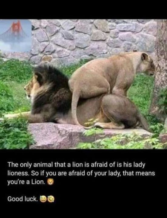 Husband And Wife Funny Pictures : husband, funny, pictures, Funny, Husband, Quotes, Sayings, English, Images