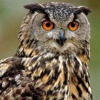 The wail of an owl is seen as a sign of witchcraft