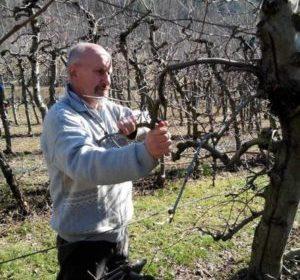 Corso di coltivazione e potatura del melo a S. Felice di Narco