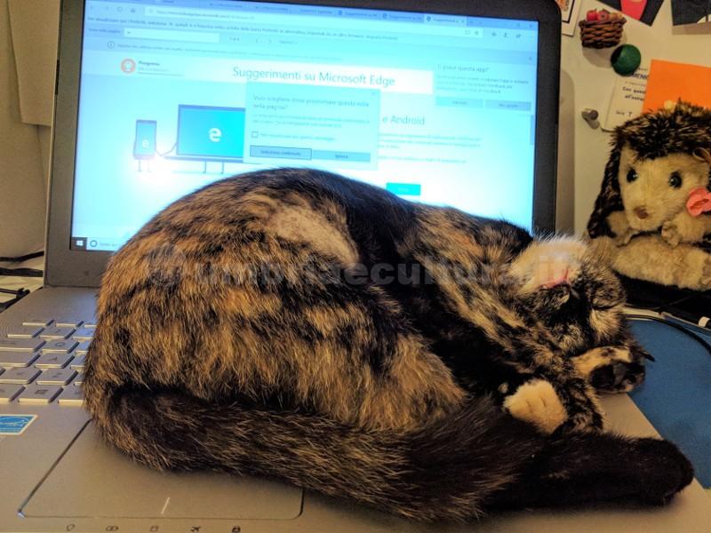gatto su computer gatti da ufficio