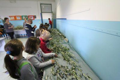 bambini delle elementari fanno l'olio