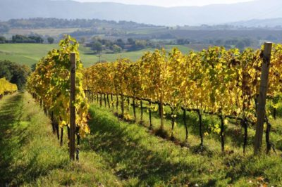 cantina zazzera vigne e vini