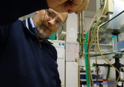#Ivolulivo cresce: viaggio all'interno del laboratorio di colture in vitro del DSA3 di Perugia