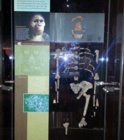 L'Università di Perugia riscrive la storia dell'uomo