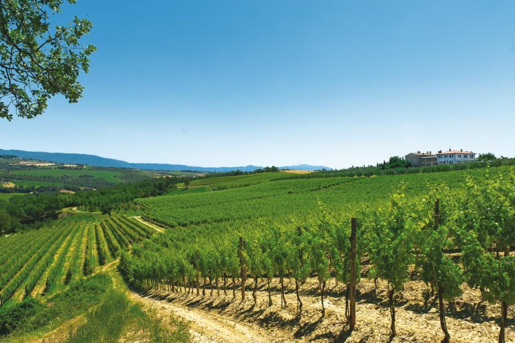 todi terra di vini