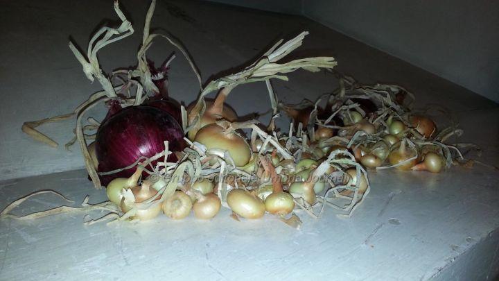 cipolla-cannara (3)