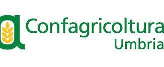 Studio di Confagricoltura Umbria di un nuovo modello per gestione sostenibile del vigneto La presentazione a palazzo dei Sette di Orvieto, giovedì 15 ottobre, alle 15.30
