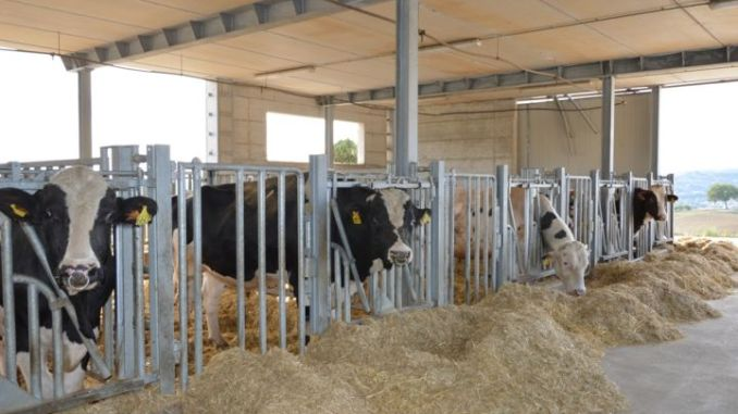 Partner Università Federico II, Cooperative agricole di Trevi e 3A Parco Tecnologico Umbria. Obiettivo: migliorare la fertilità maschile nella razza bovina e bufalina