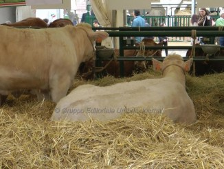 Bastia Umbra, Agriumbria, ad Umbriafiere il mondo agricolo italiano