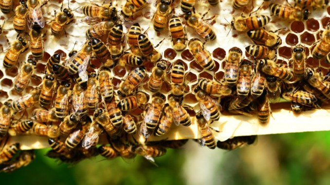 Apicoltura, Comuni umbri alleati delle api tutela della biodiversità