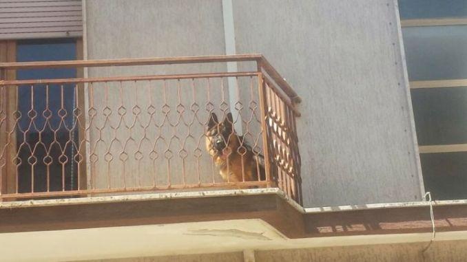 Lasciano il cane in terrazzo e vanno in vacanza, succede a Perugia