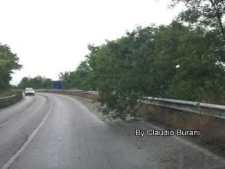 Maltempo al Trasimeno, alberi schiantati e auto in difficoltà