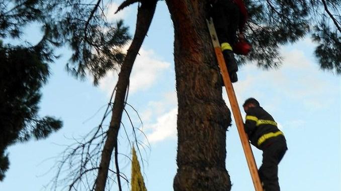 Pieve di Campo e il ramo a penzoloni inascoltato, sfiorata la tragedia