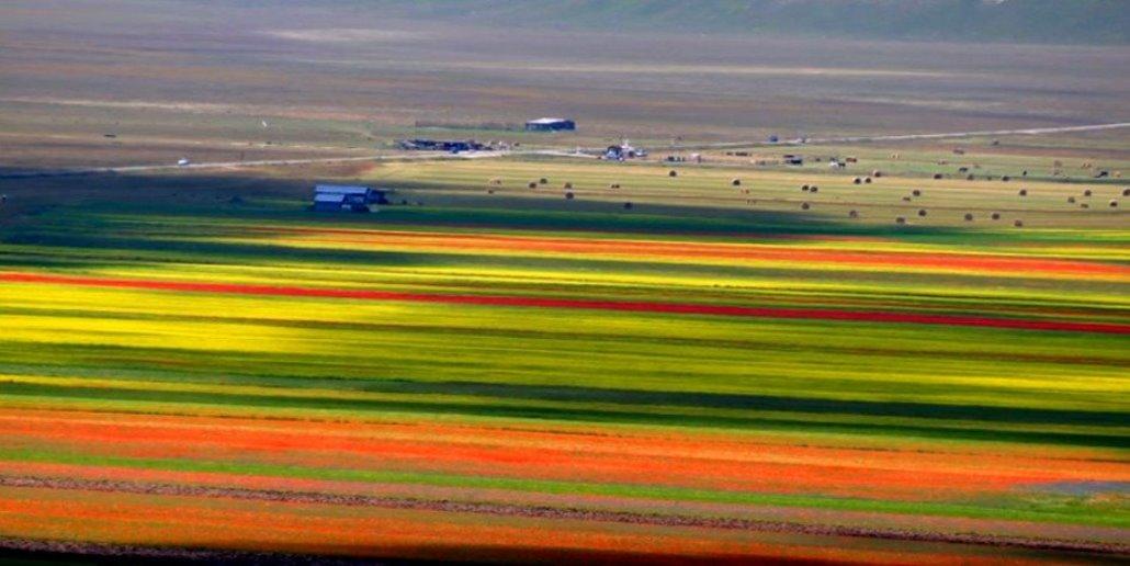 Addio alla Fioritura di Castelluccio, agricoltori non ascoltati si ribellano