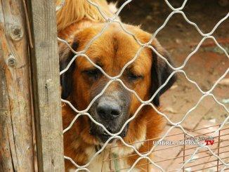 Animali, contributo di 400 euro per adottare cane al canile Iniziativa di Giano dell' Umbria