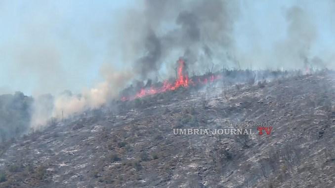 Incendio devasta bosco a Montegualandro, divorati circa cinquanta ettari di verde