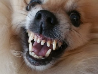 Cane morde bimbo di 15 mesi al volto, ferite non gravi, è in ospedale