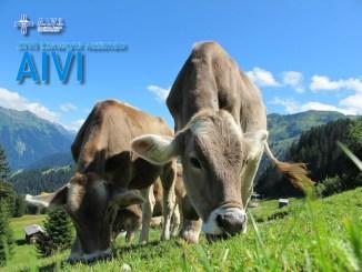 Medicina Veterinaria e filiera agroalimentare a Perugia convegno Aivi